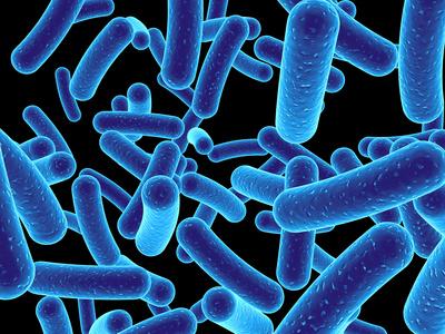 blaue bakterien